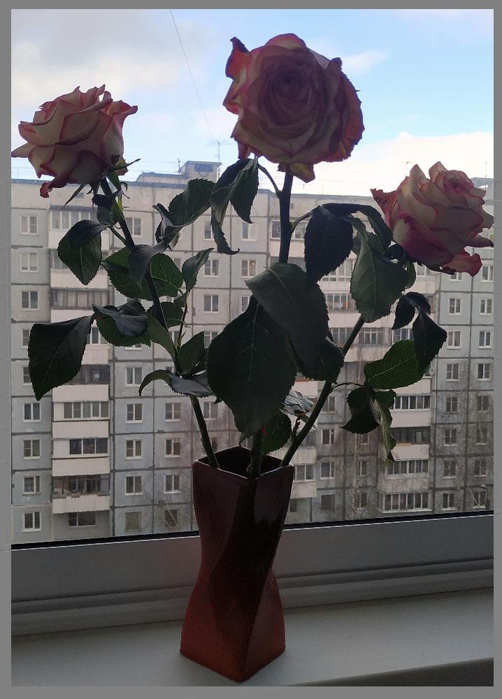 rosei1.jpg